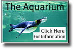 graphic link to site age on the Melbourne Aquarium