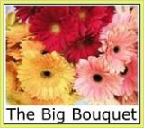 Gallery thumbnail for the Big Bouquet Gerbera Farm and Alpaca stud