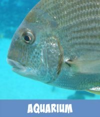 Image link to Site page on Melbourne Aquarium