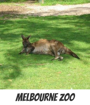 Image link to Site page on the Royal Melbourne Zoo
