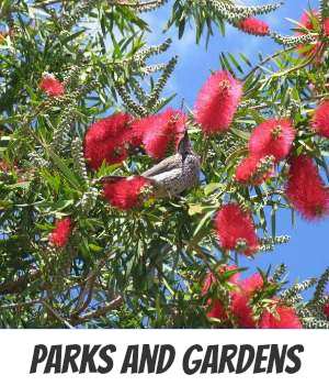 Image link to Site page on parks and Gardens in Melbourne