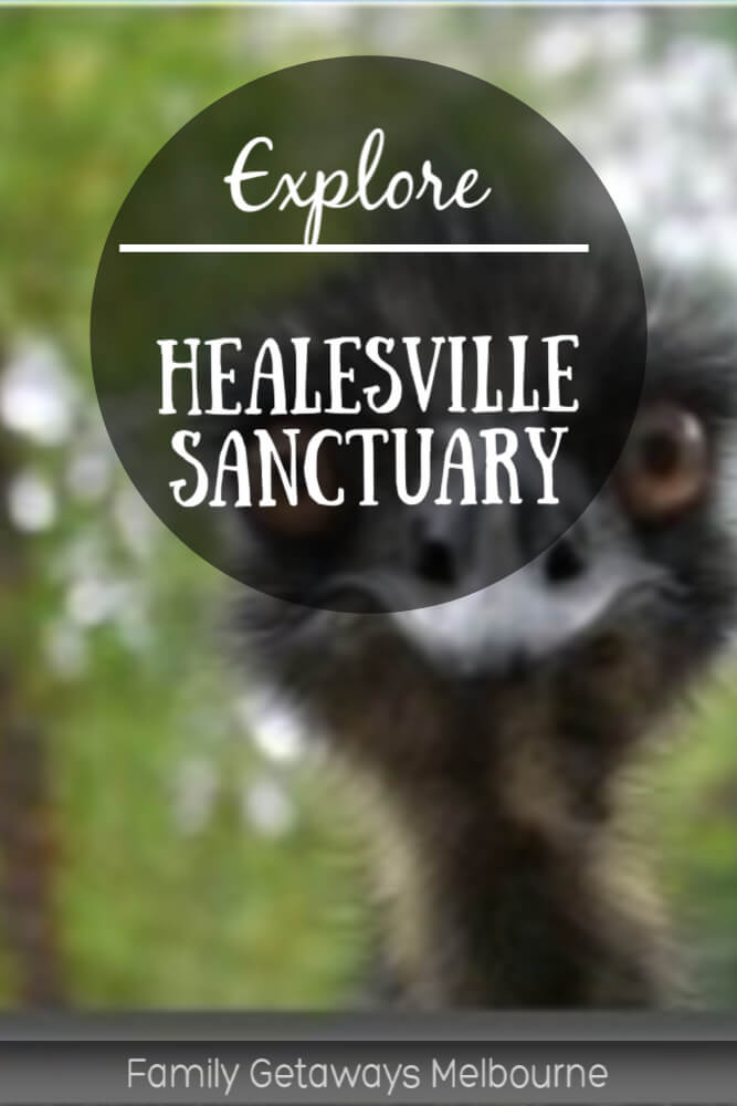 Healesville Sanctuary image to pin to pinterest
