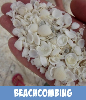 Thumbnail graphic link to Site page Beachcombing