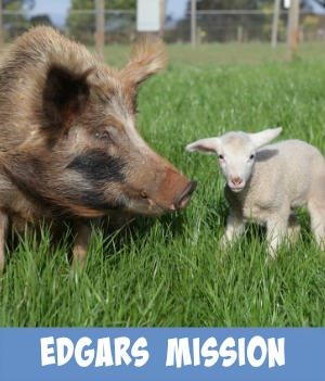 Image link to Site page on Edgars Mission