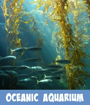 Thumbnail graphic link to the Site Page Oceanic Aquarium
