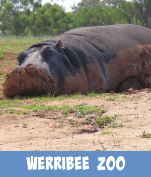 image link to site page on Werribee Wildlife Zoo