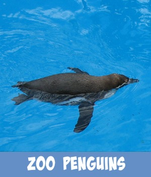 image link to site page on zoo penguins