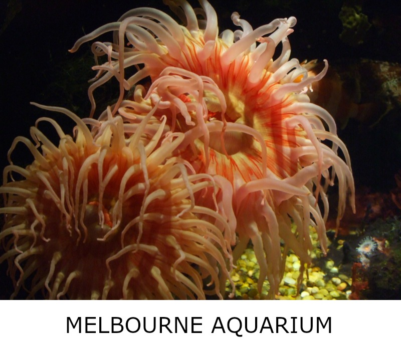 Image link to site page for more information on the Melbourne Aquarium