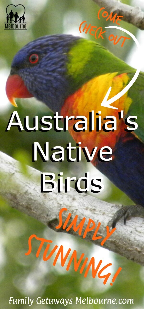Australian native birds image to pin to Pinterest