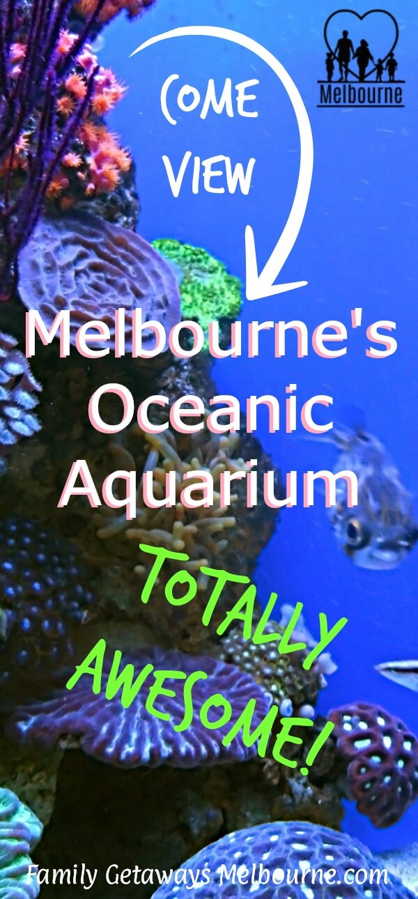 image of coral at the oceanic aquarium in Melbourne to pin to Pinterest