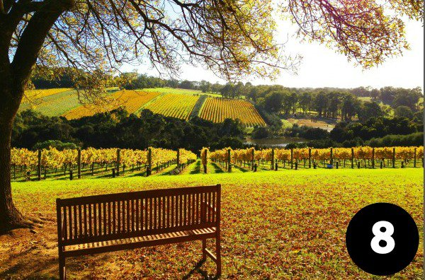 Viator's tour in the yarra Valley wine district