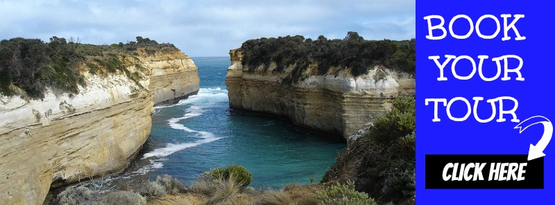 Book the impressive Great Ocean Road Eco Tour