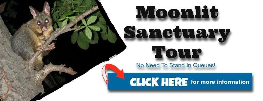 how to get to moonlit sanctuary from melbourne