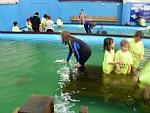 Feeding the sharks at the Australian Shark and Stingray Centre
