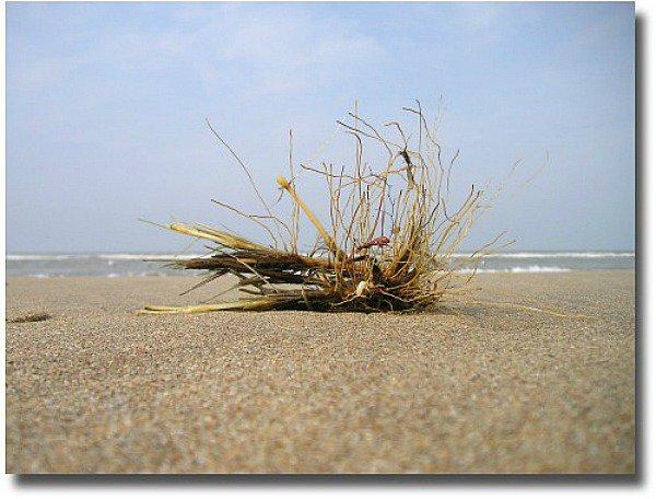 Seagrass on a remote beach shoreline