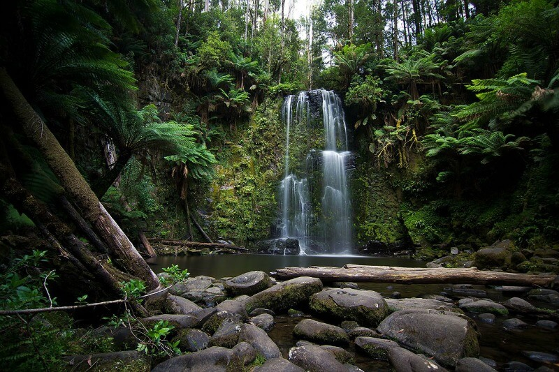 Beauchamp Falls in the Otways By Philli b 123 - Own work, CC BY-SA 4.0, https://commons.wikimedia.org/w/index.php?curid=48961252