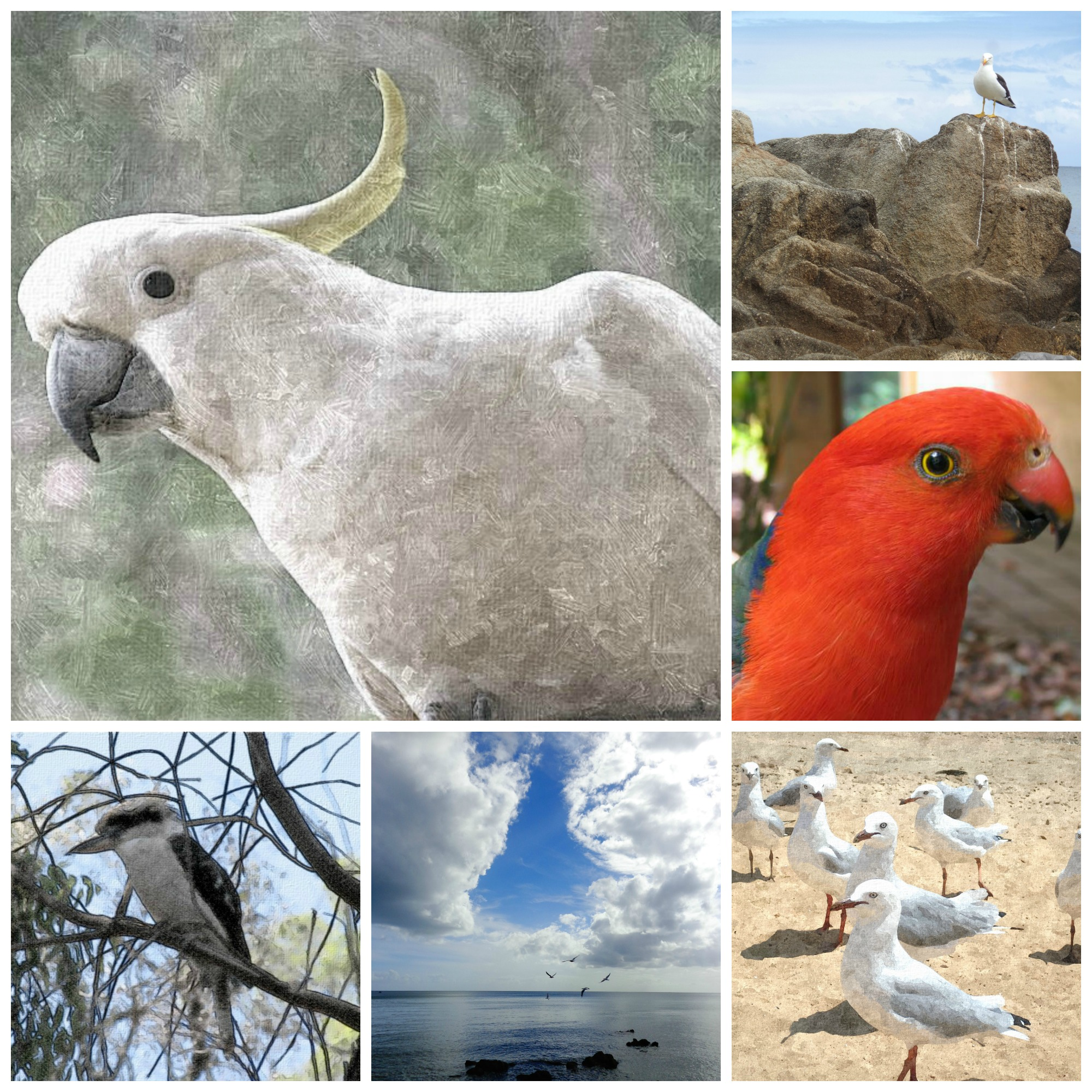 Collage selection of the poster series on Australian Native Birds