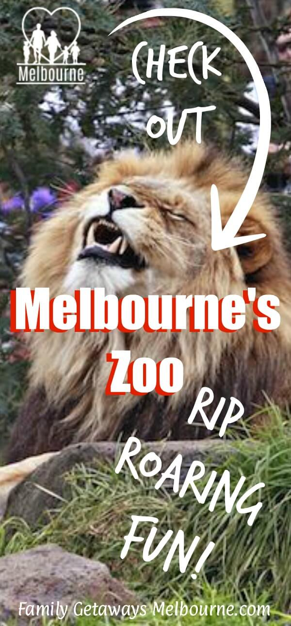 Image to pin to Pinterest for the site page on Melbourne Zoo Exhibit