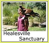 Healesville Sanctuary eagle and trainer