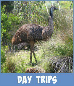 Image link to Site page on Melbourne Day Trips