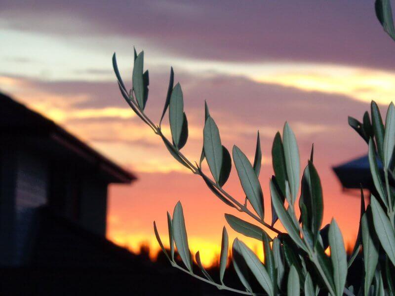 Daylight savings sunset over Pakenham