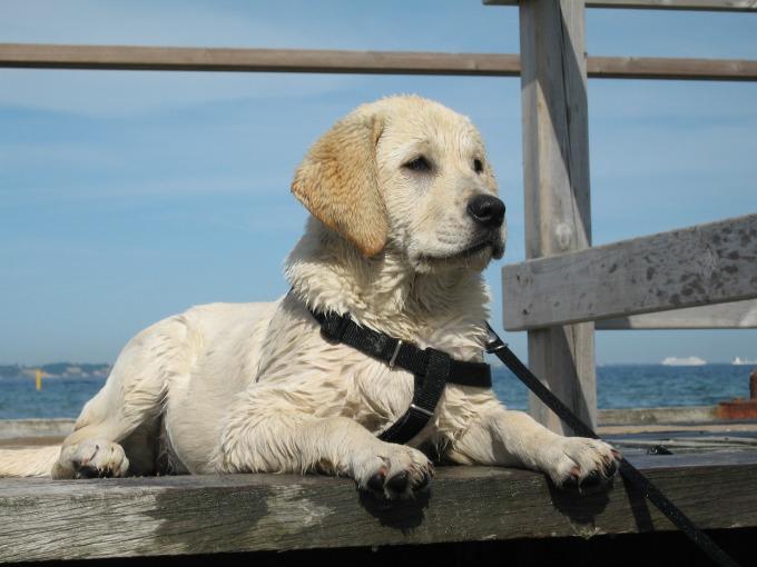 Port Melbourne dog beach