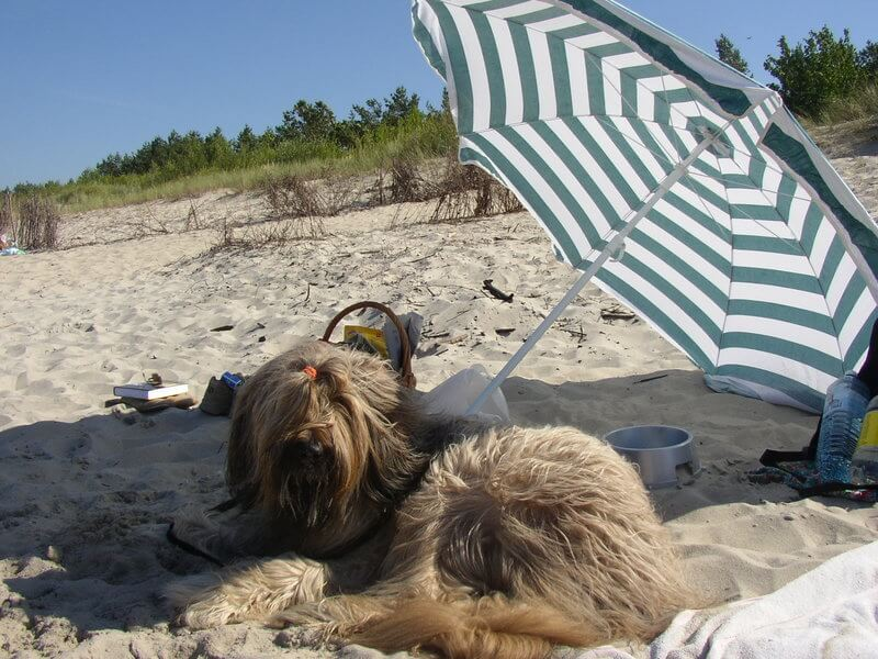 Here I am at the dog beach