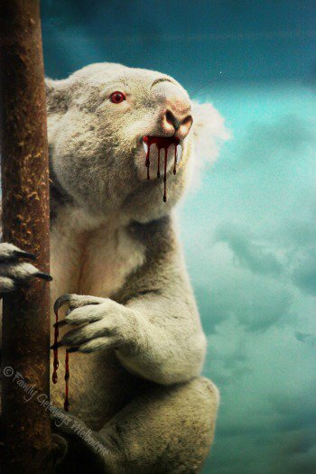 Killer Drop Bear