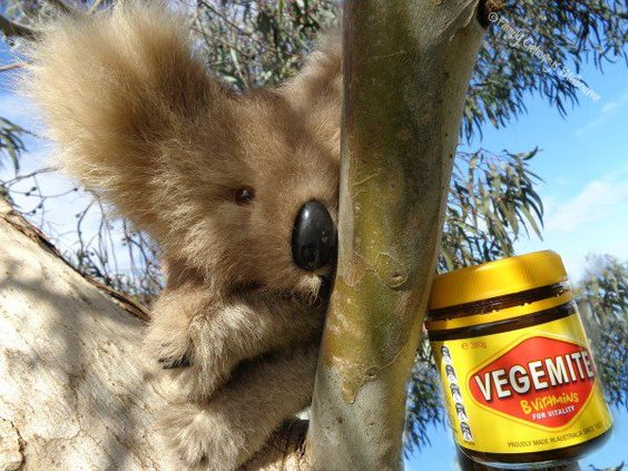Drop Bears fear vegemite