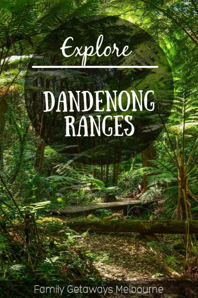 explore the dandenong rainforest