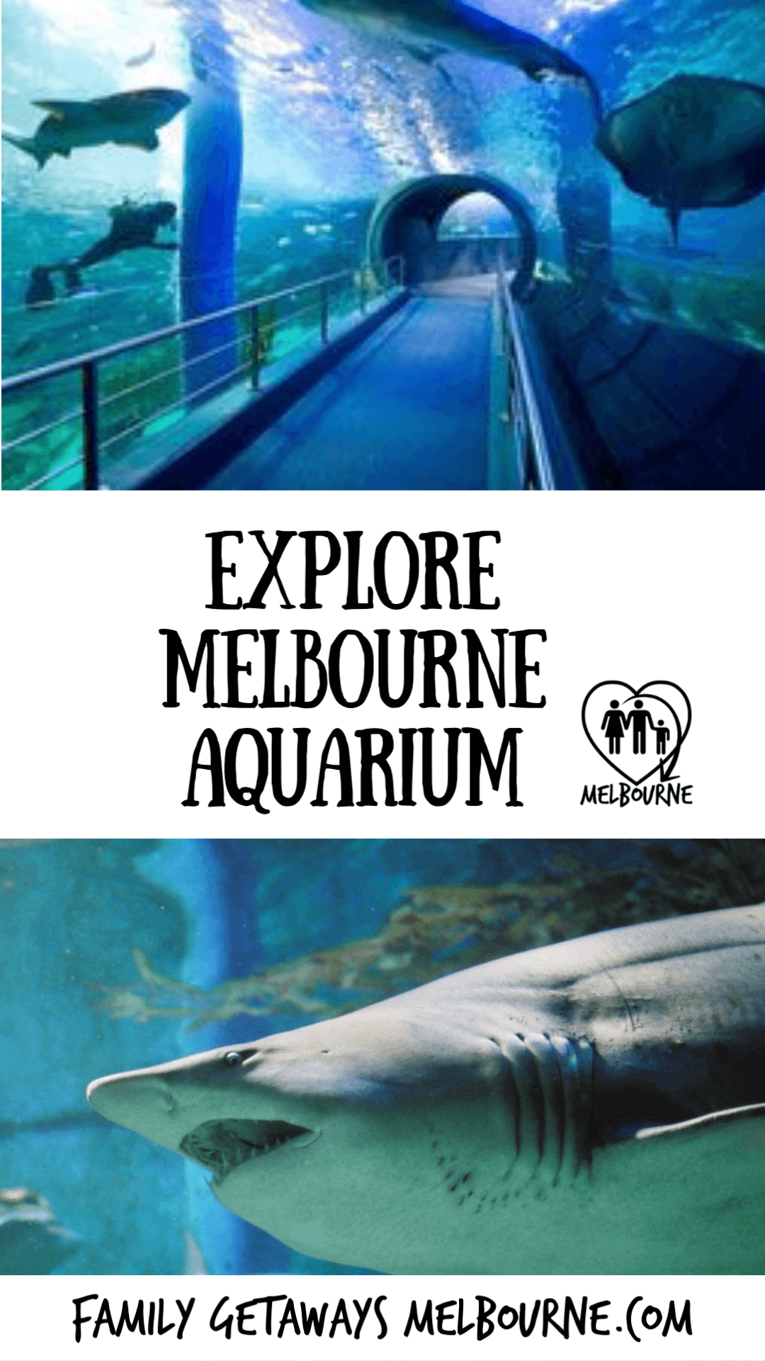 image to pin to pinterest to link to site page on the melbourne aquarium