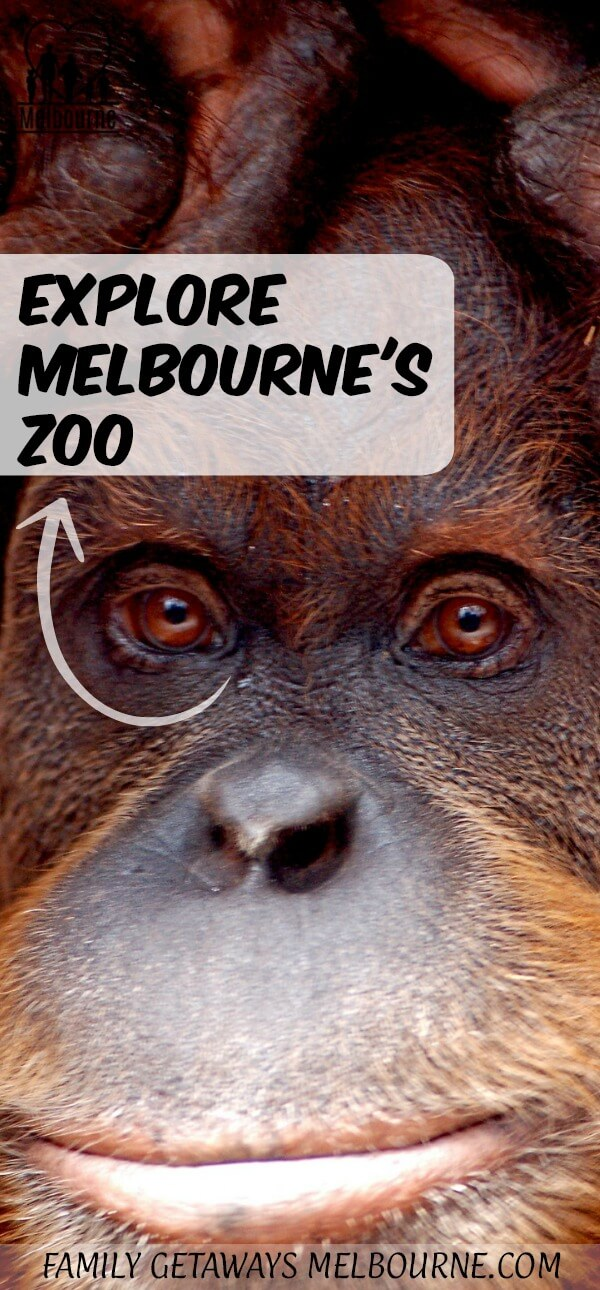 Melbourne Zoo Pinterest Pin to share