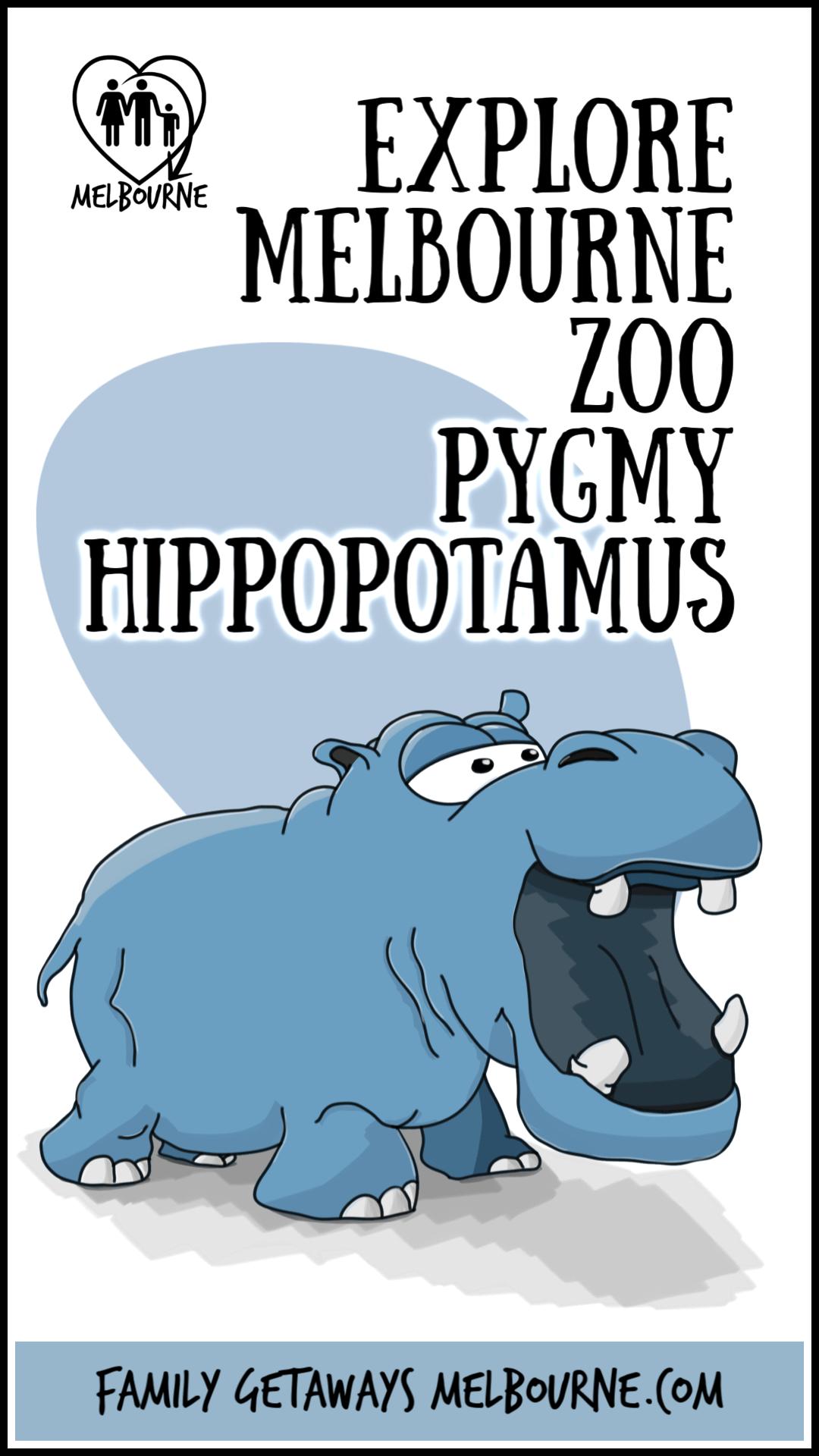 Pin this image to Pinterest of the Melbourne Zoo's pygmy hippopotamus