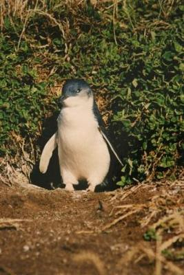 Cheap Phillip Island Tours From Melbourne