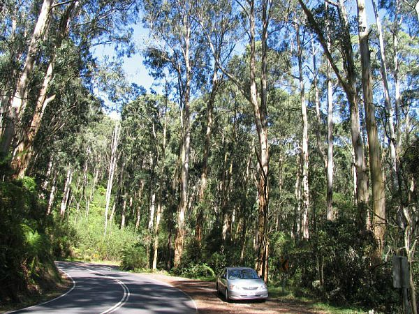 Driving in the Dandenong Mountains Melbourne Australia