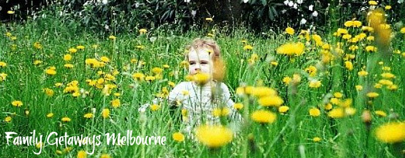 child in the dandelions