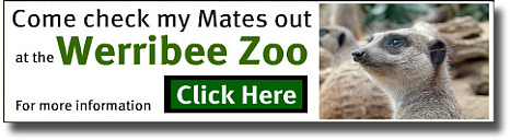 Banner link to the websites Werribee Zoo Page