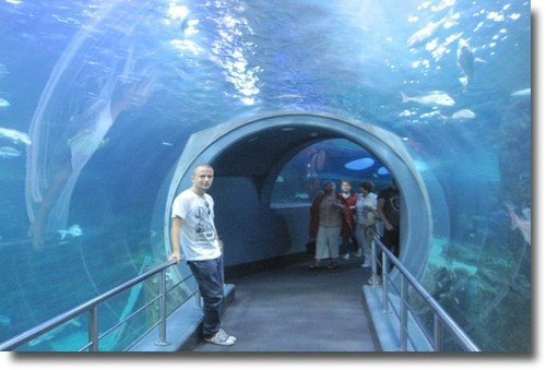 Aquarium tunnel at the Melbourne Oceanarium compliments of http://www.flickr.com/photos/stenbjerg/6336477432/