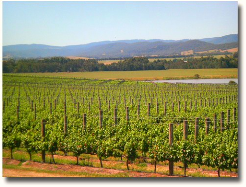 Yarra Valley wine growing area compliments of http://www.flickr.com/photos/captainchaos/318701066/