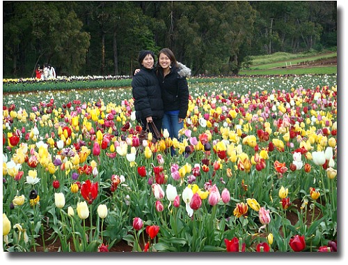 Tessellars Tulip farm Festival compliments of http://www.flickr.com/photos/olivialoh/1678932610/in/photostream/
