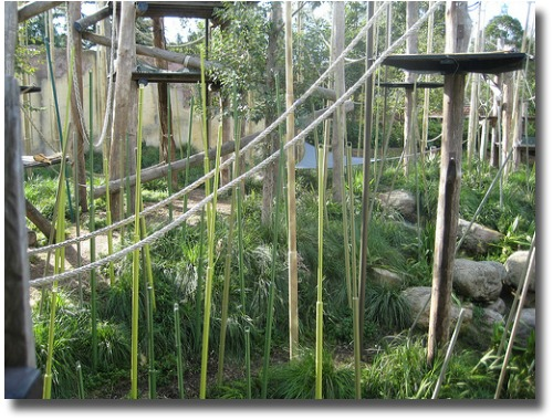 Orangutans enclosure at the Melbourne Zoo Australia compliments of http://www.flickr.com/photos/coffeelab/2528370667/
