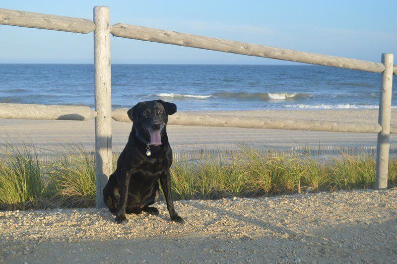 Dog waiting to play at the dog beach