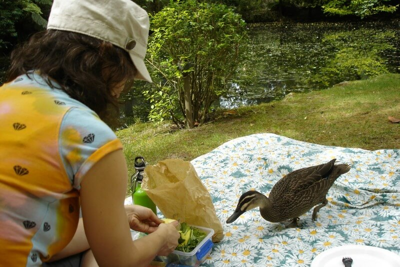 Picnic in the park with ducks Mount Dandenong Melbourne Australia compliments of http://www.flickr.com/photos/mrowka/4434248925/