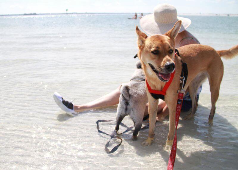 Off leash dog beach at West St Kilda