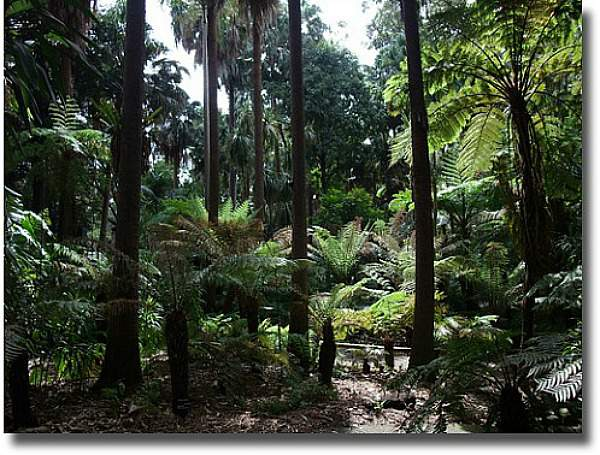 Wander Through The Botanical Rainforest Melbourne Australia compliments of http://www.flickr.com/photos/_tom_/2955195684/