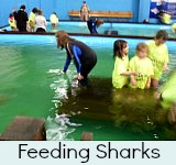 Thumbnail link to site page on Shark Feeding
