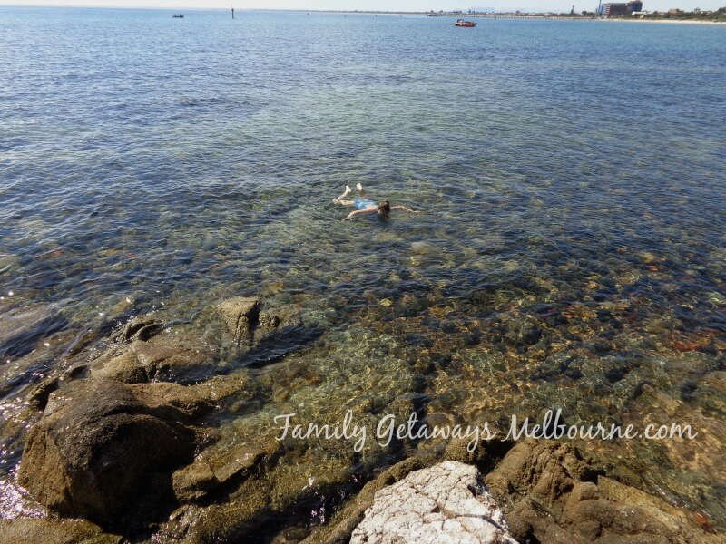 Snorkeling at Frankston Beach