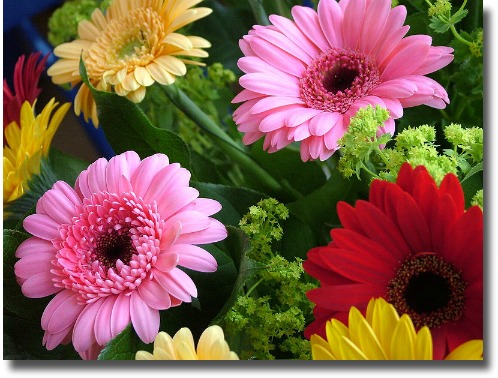 Colourful gerberas compliments of http://commons.wikimedia.org/wiki/File:Gerbera_farben.JPG, this file is licensed under the Creative Commons Attribution-Share Alike 3.0 Unported, 2.5 Generic, 2.0 Generic and 1.0 Generic license.