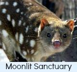 thumbnail graphic link to moonlit sanctuary tours