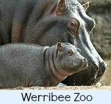 thumbnail graphic link to werribee zoo